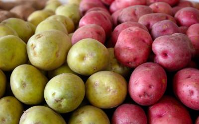Pomme de terre du Pérou